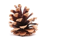 Picture for category Bristlecone Pine