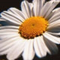 Picture for category Pyrethrum Insecticides